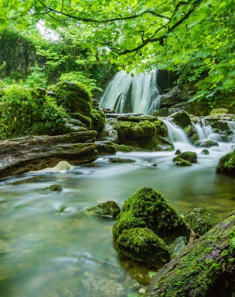 cascade-creek-environment-fern-460621
